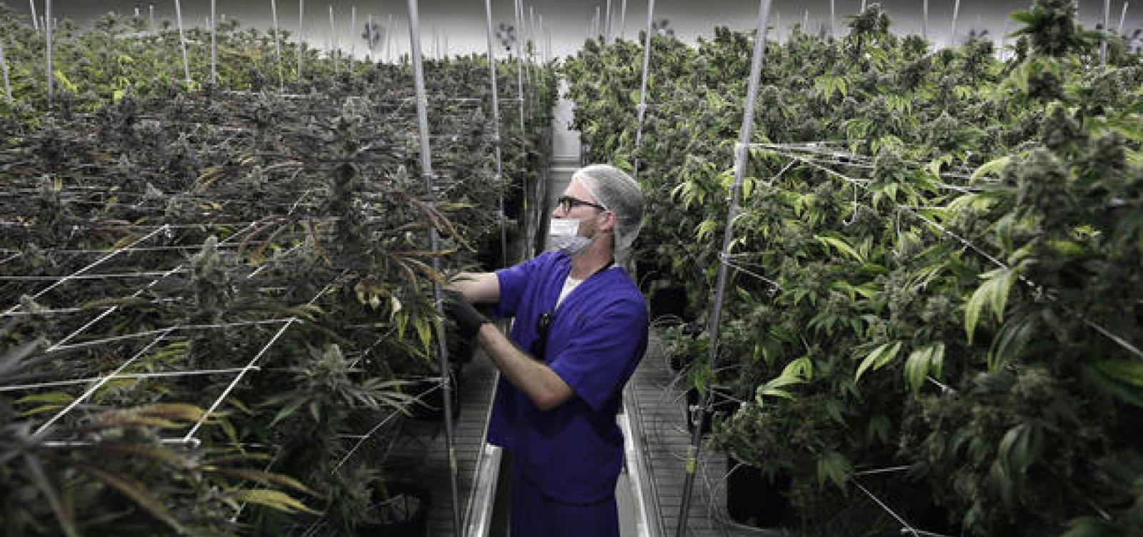 [Michigan aprova uso recreativo de maconha e se torna 10º Estado dos EUA a legalizar a erva]