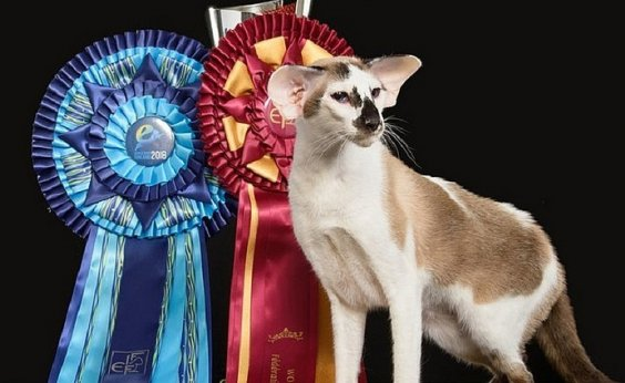 [Gata baiana ganha mundial de felinos na Finlândia]