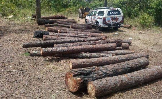 [Onze pessoas são presas em flagrante por desmatamento em área de proteção ambiental]