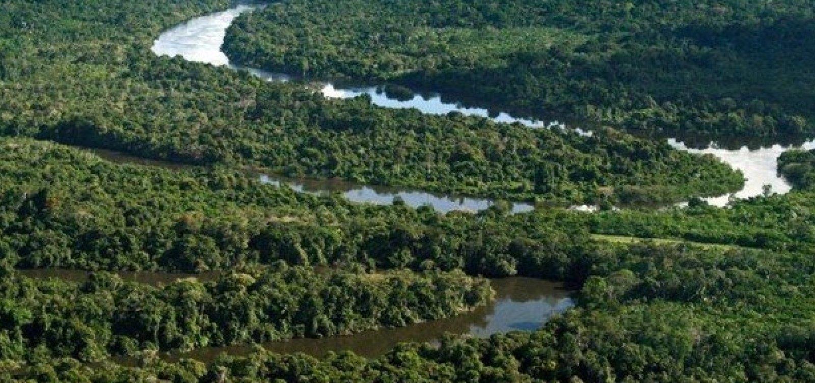 [Desmatamento na Amazônia cresce e alcança maior número da última década]