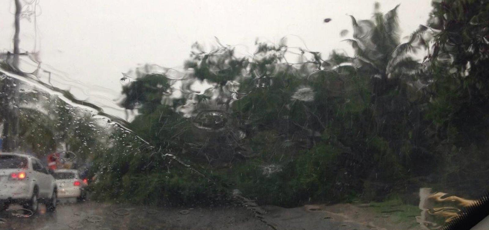 [Chuva provoca queda de árvores em Lauro de Freitas]