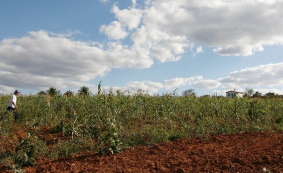 [Produção de soja na Bahia deve cair mais de 20% em 2019]