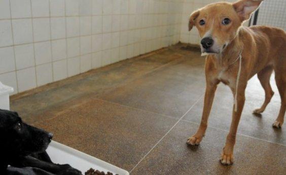 [Câmara aprova aumento de pena para maus-tratos contra animais]