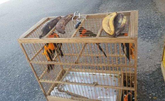[Homem é flagrado transportando aves silvestres em caminhão no sudoeste da Bahia]