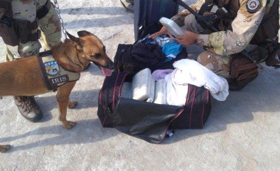 [Cães farejadores localizam carga de maconha e PM prende suspeitos de tráfico]