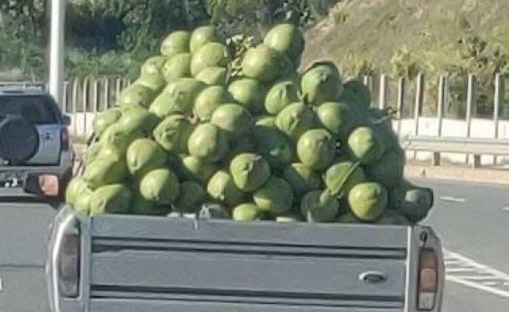 [Caminhonete carregada de cocos gera riscos a motoristas em Piatã]