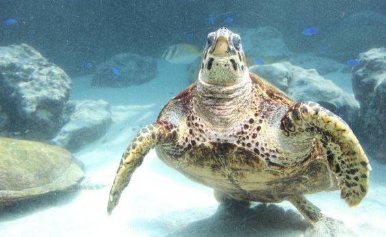 [Sul da Bahia registra mais de 30 tartarugas encontradas mortas em 2019]