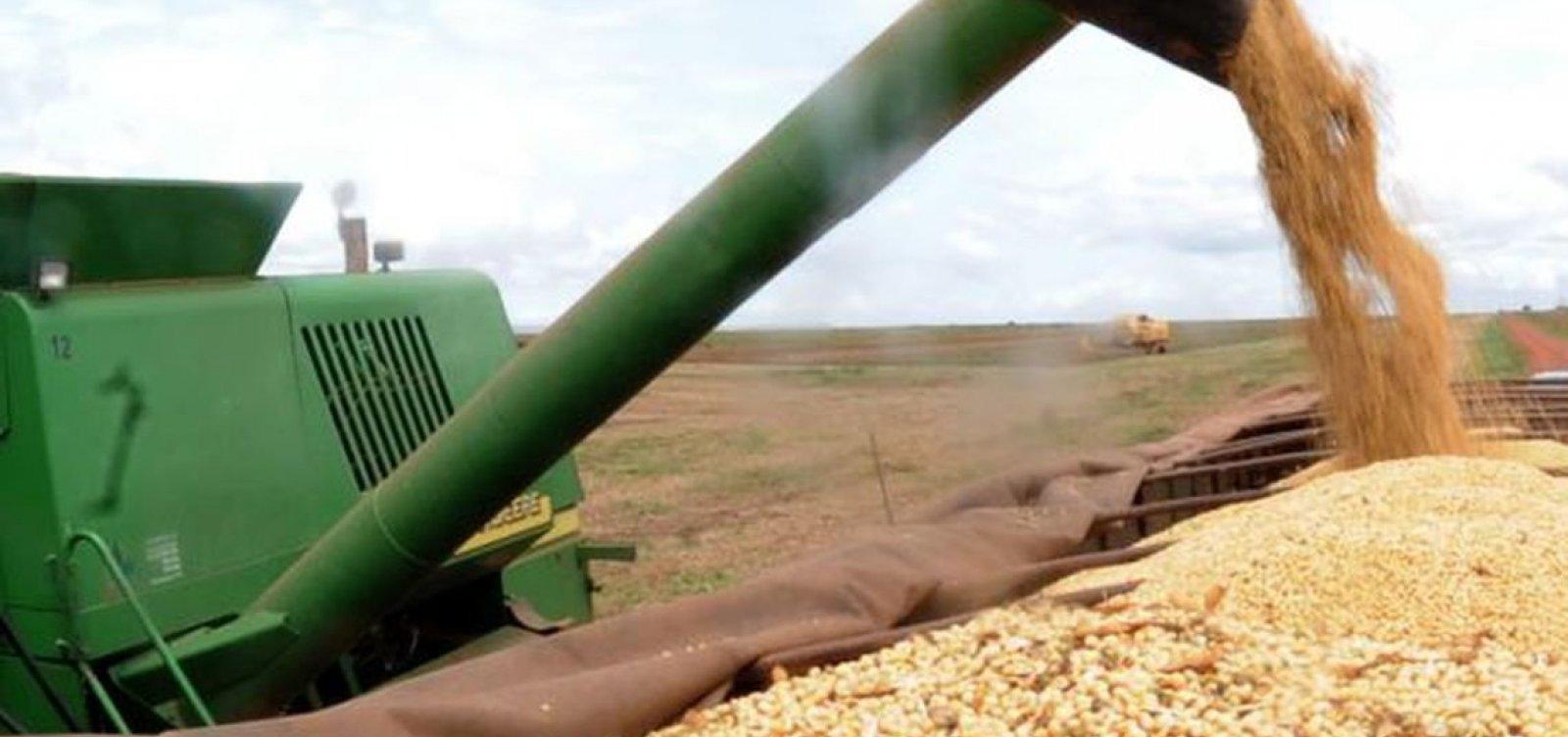 [Safra de grãos deste ano na Bahia será 15,4% menor que a de 2018, diz IGBE]
