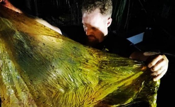 [Cerca de 40 quilos de plástico são encontrados em estômago de baleia morta]