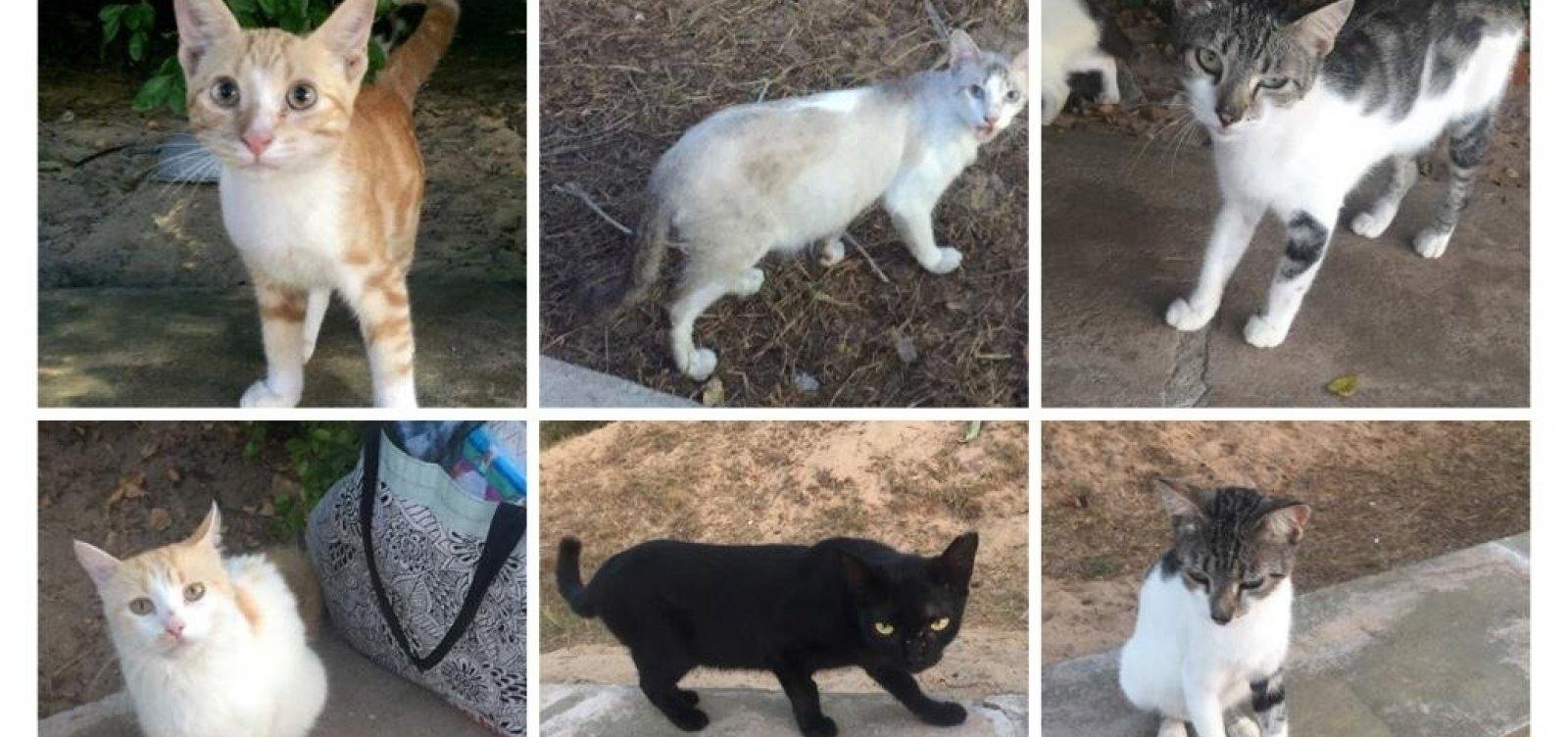 [Grupo de Salvador faz campanha de doações para castração de gatos de rua]