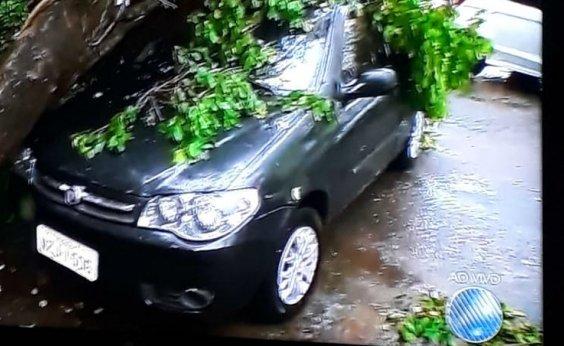 [Após chuvas, árvore cai em cima de carro na Pituba]