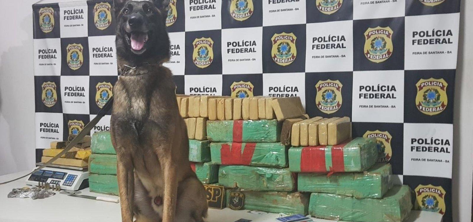 [Cão farejador localiza 160 kg de maconha e mulher é presa em flagrante]