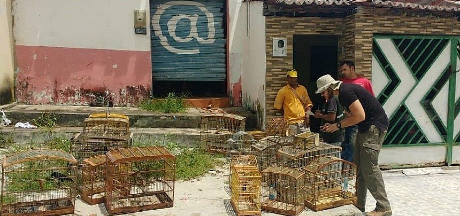 [Polícia e Inema libertam mais de 80 aves silvestres em Pindobaçu ]