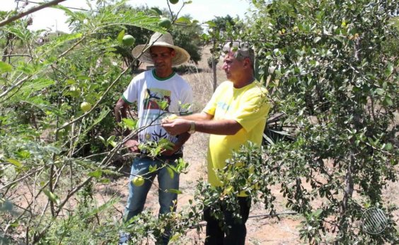 [Produtores rurais passam a emitir Nota Fiscal Eletrônica com o CPF na Bahia]