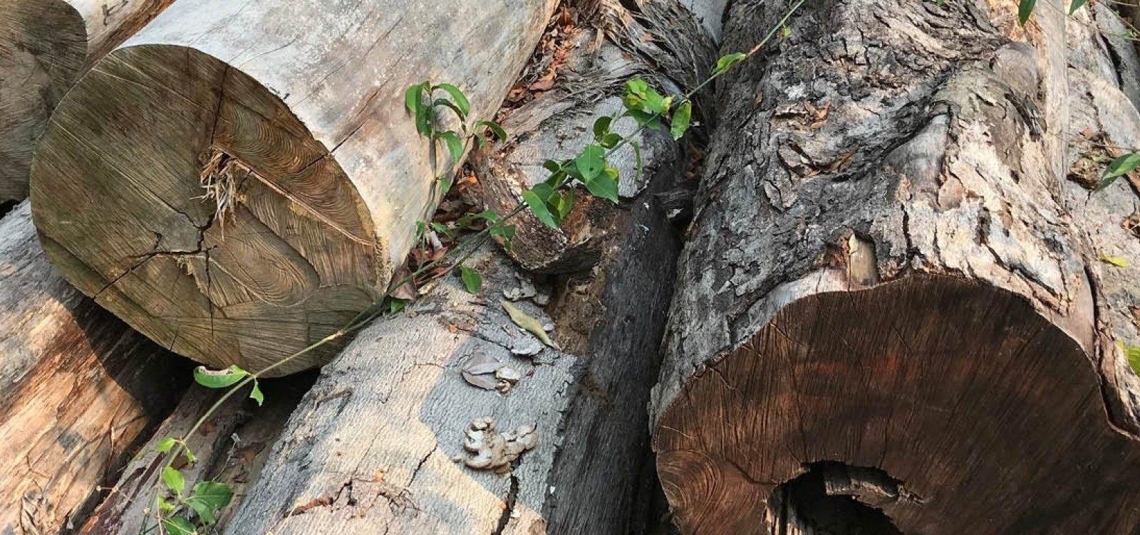 [PF deflagra operação contra desmatamento ilegal na Amazônia]