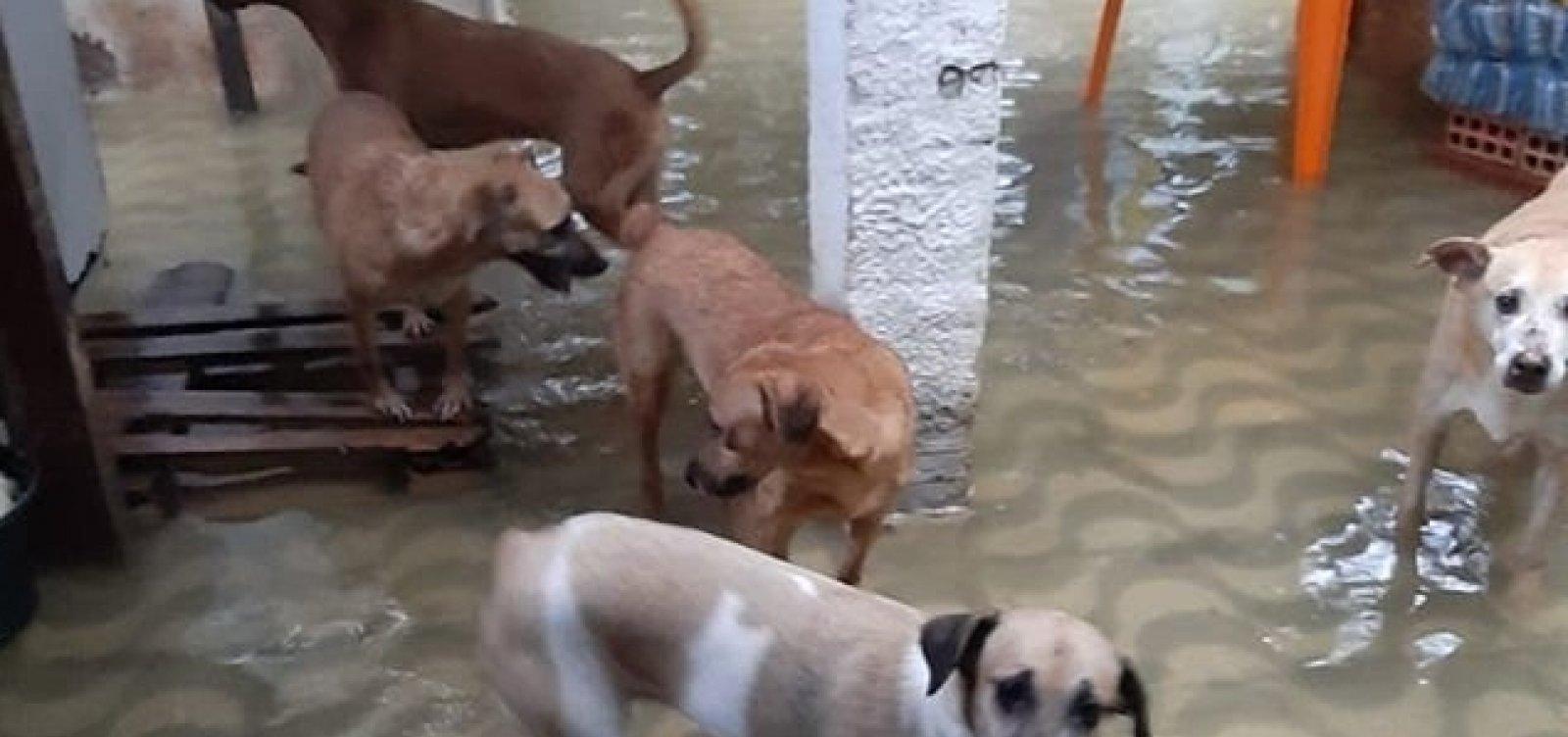 [Abrigo de animais pede socorro após alagamentos em Salvador]