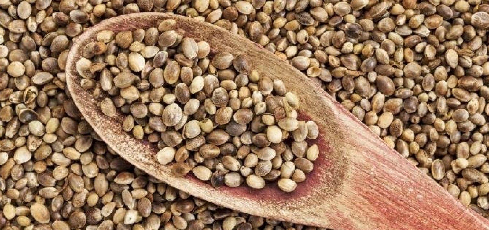 [STF considera que importação da semente de cannabis não é crime]