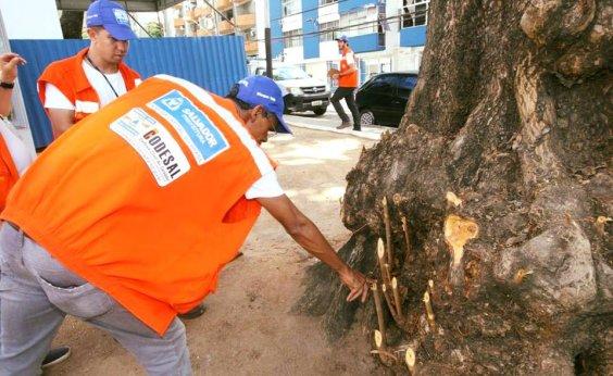[Defesa Civil registra 80 ocorrências nesta quinta em Salvador]