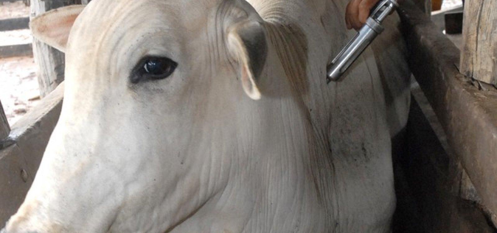 [Vacinação contra Febre Aftosa na Bahia termina no dia 31 de maio]