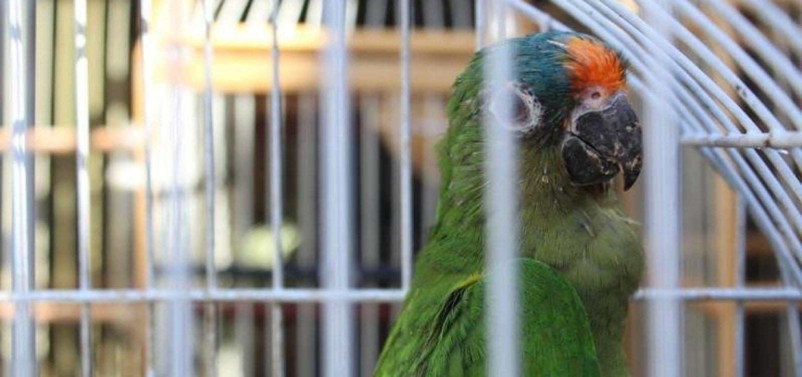 [Operação resgata 575 animais silvestres na região sul da Bahia]