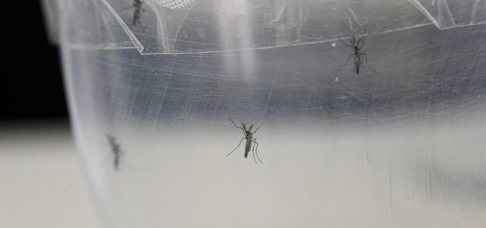 [Doença com sintomas semelhantes aos da dengue assusta moradores de Entre Rios]