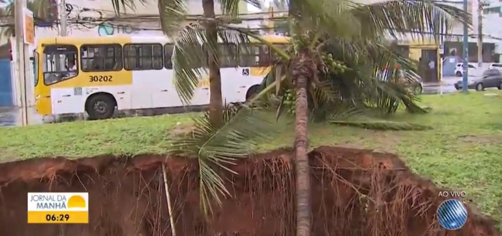 [Chuva causa queda de árvores e falta de energia em Salvador]