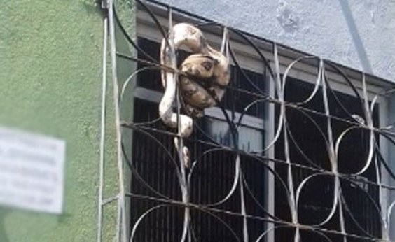 [Salvador registra resgate de 162 serpentes em 2019]