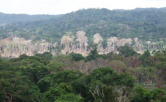 [Após Alemanha, Noruega cancela repasse de R$ 133 mi para a proteção da Amazônia]