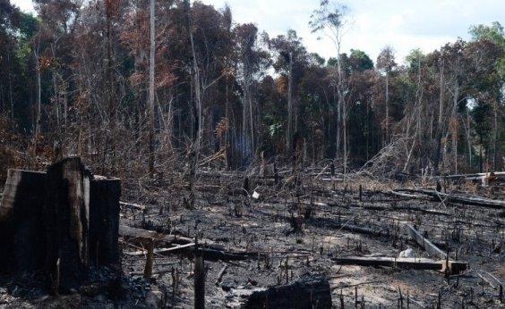 [Desmatamento na Amazônia Legal cresce 66% em julho]