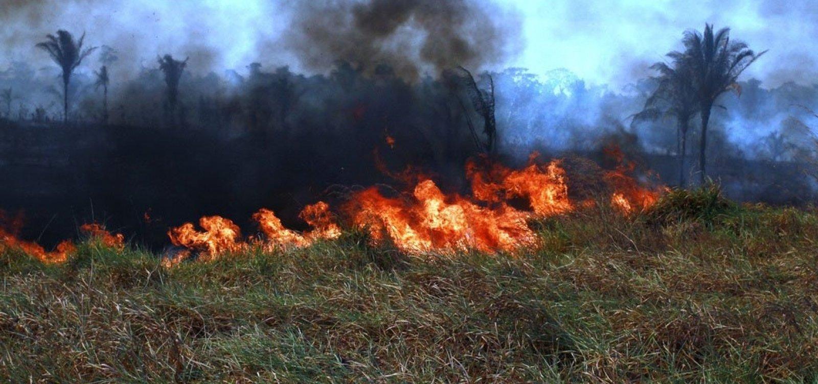 [Ministro da Finlândia quer banir importação de carne brasileira após incêndios na Amazônia]