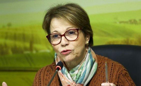 [Agronegócio não pode ser culpado pelas queimadas, diz Ministra da Agricultura]