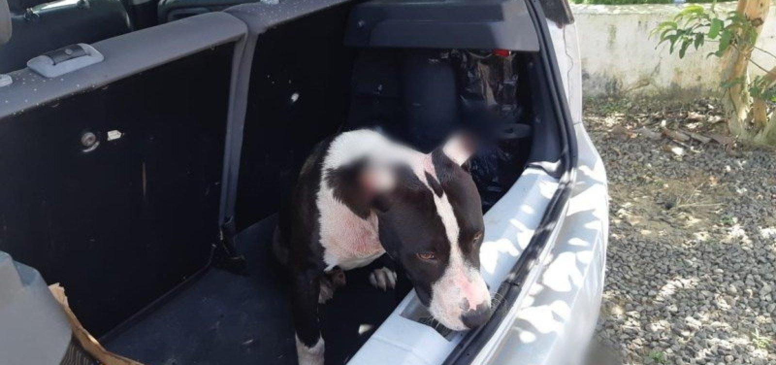 [Cachorro vítima de maus-tratos é resgatado de porta-malas de carro na BR-116]