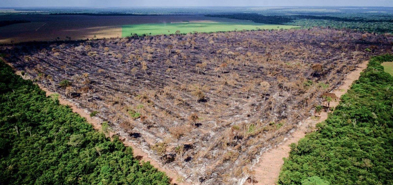 [Repasses alemães para projetos ambientais equivalem em 1 ano a 4 vezes o orçamento do Ibama]