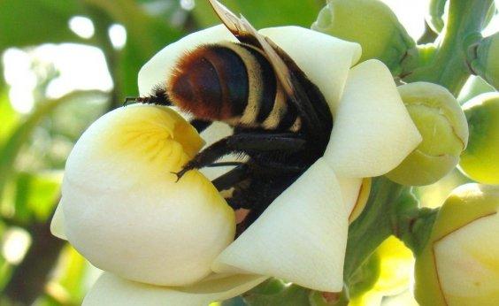 [Brasil conclui testes de soro inédito para picadas múltiplas de abelhas]