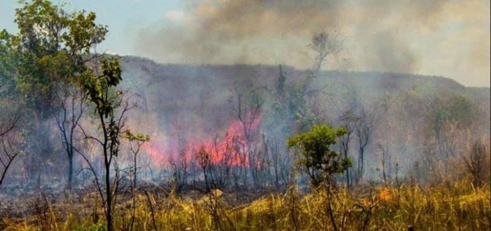 [Bahia tem quase 32 mil focos de queimadas em 2019]