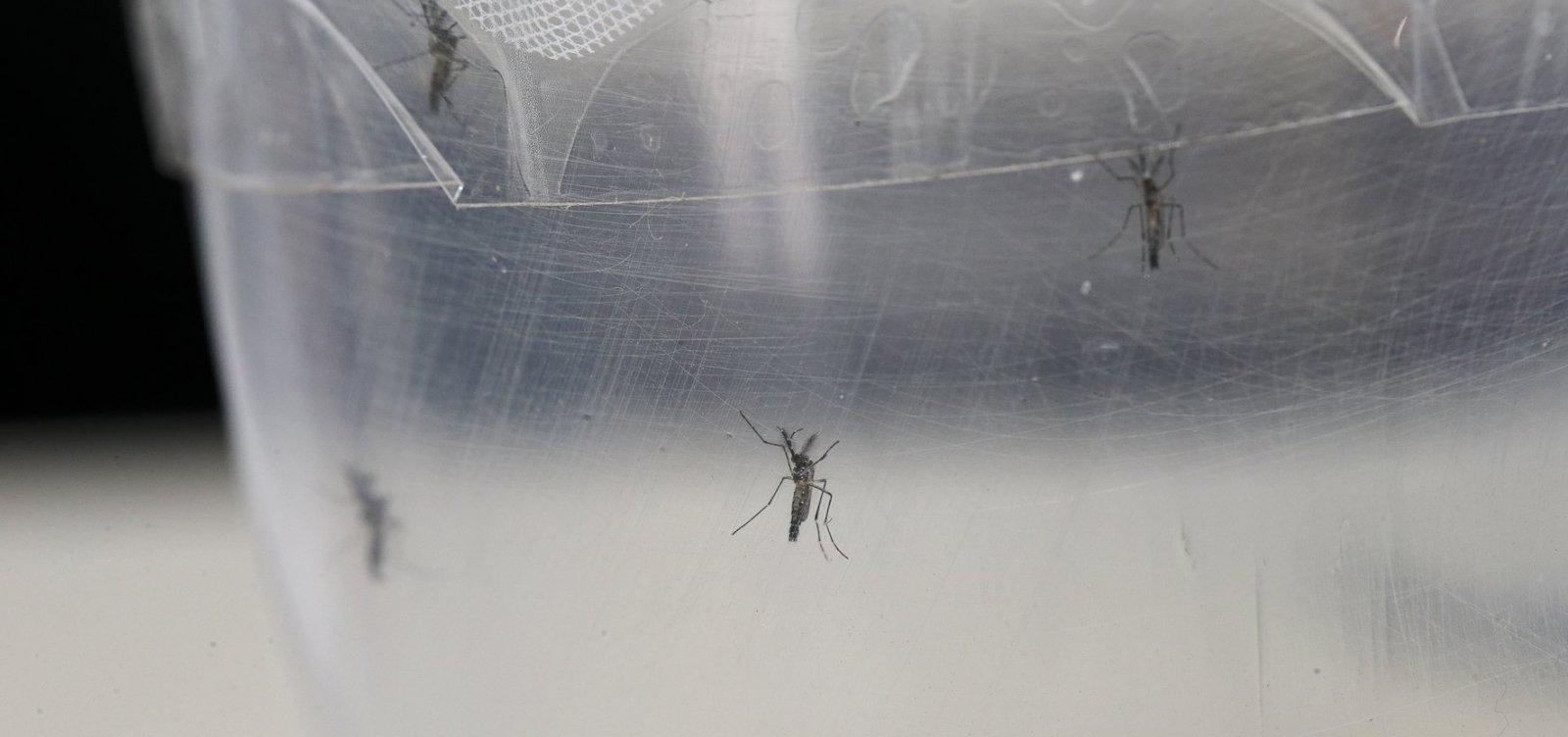 [Casos de dengue aumentam sete vezes no Brasil em 2019]