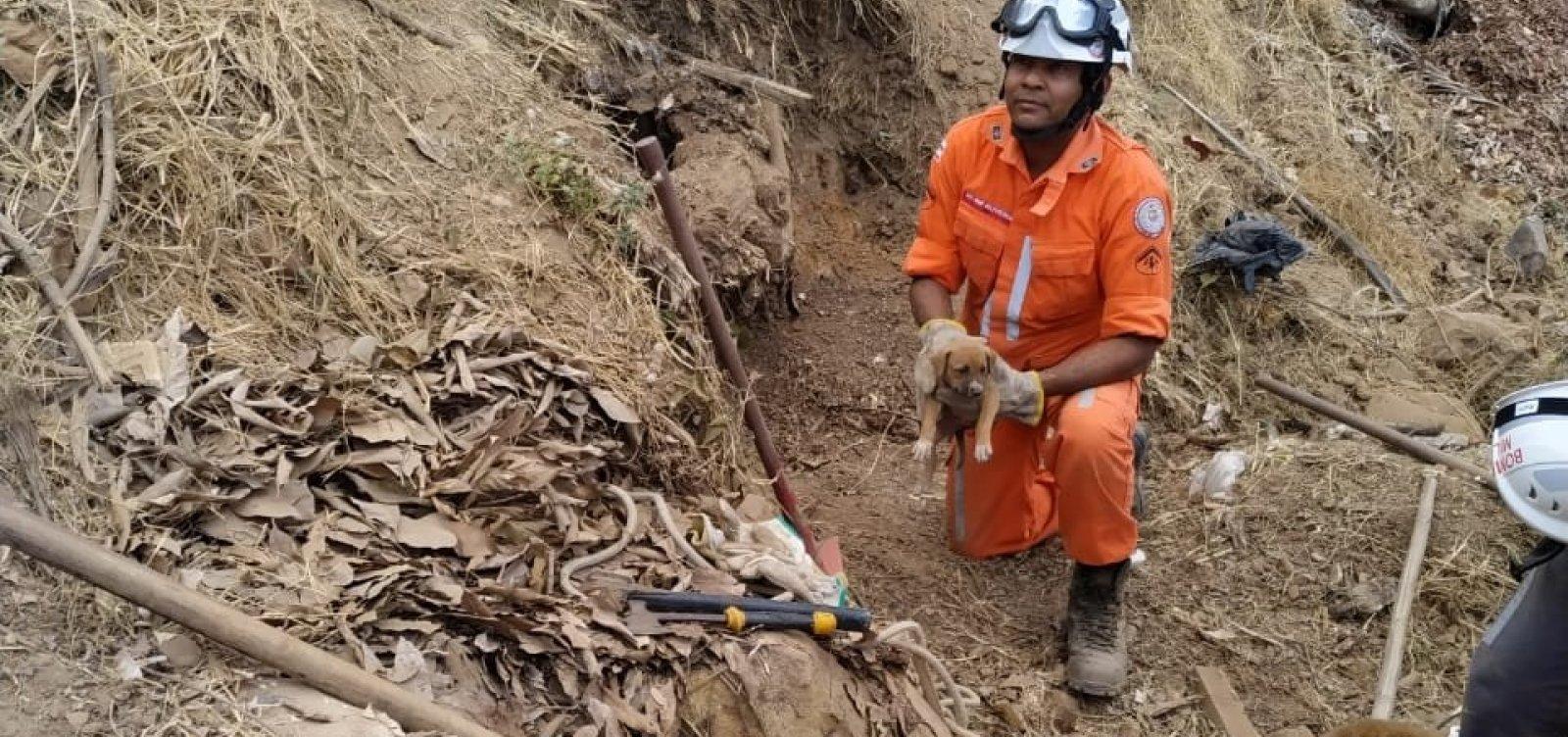 [Após 30 dias presos em buraco, filhotes são resgatados por bombeiros]