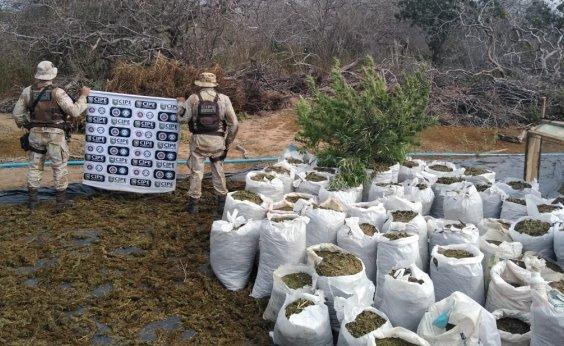 [Três toneladas de maconha erradicadas em Monte Santo]