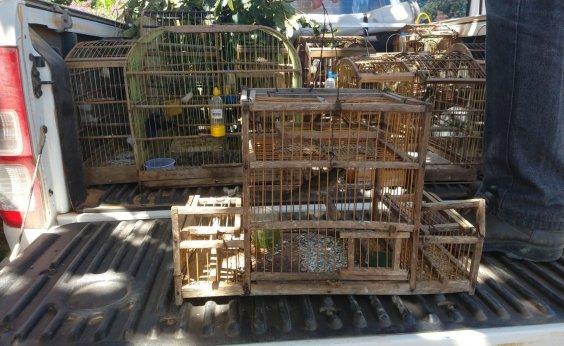 [Pássaros silvestres são apreendidos em cativeiro irregular no sudoeste do estado]