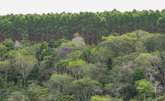 [Bahia registra aumento de 1,9% na produção florestal]