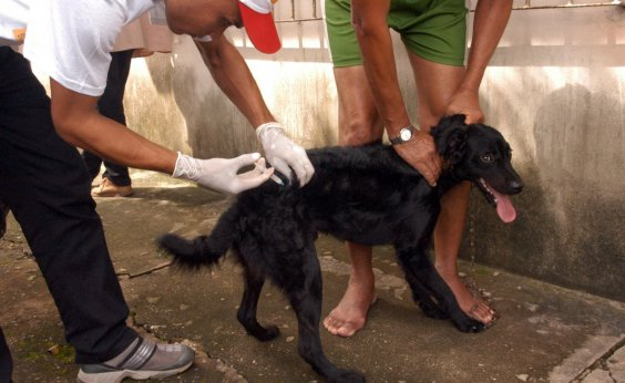 [Após atraso na entrega de vacinas, campanha contra raiva é suspensa na Bahia]