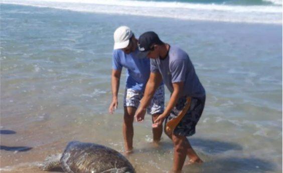 [Ceará já contabiliza 23 tartarugas mortas após surgimento de manchas de óleo no mar]