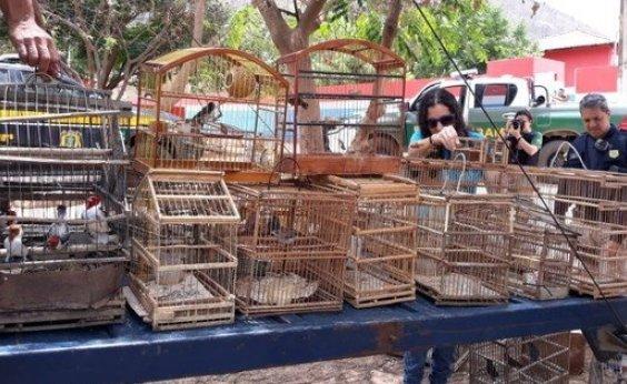 [Operação do MP-BA resgata mais de 200 animais silvestres]