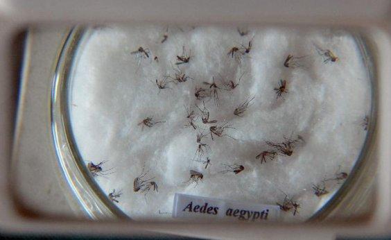 [Casos de dengue aumentam 340% em Salvador]