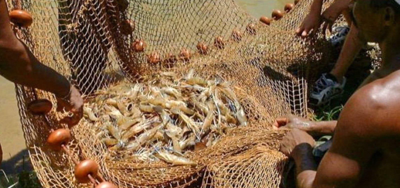 [Após manchas de óleo, pesca de camarão e lagosta será proibida em regiões da Bahia]