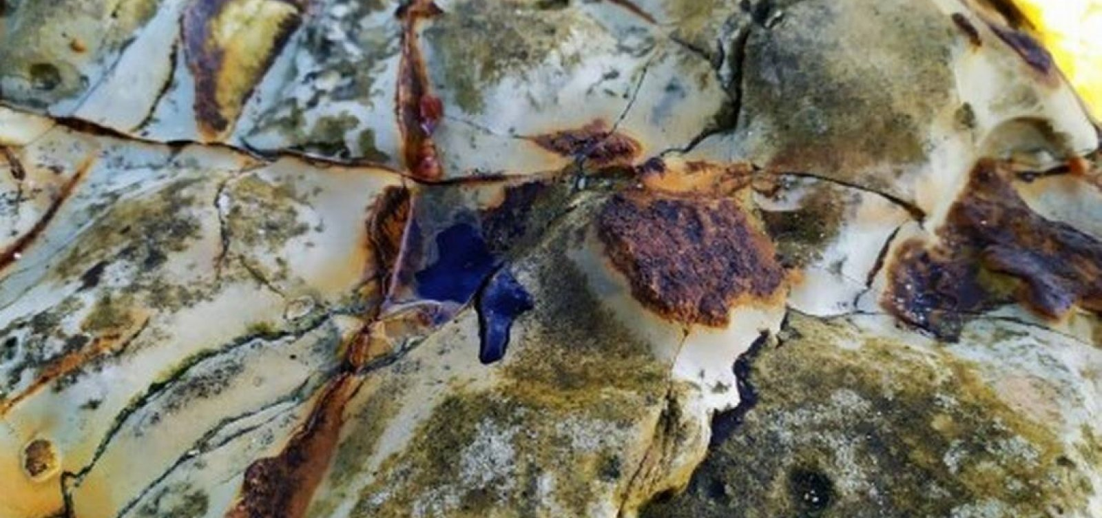 [Redes de pesca apreendidas são usadas para conter óleo em Abrolhos]