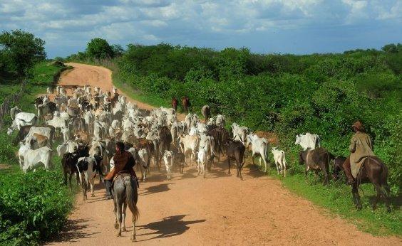 [Governo tenta reverter veto à carne bovina brasileira, segundo porta-voz]