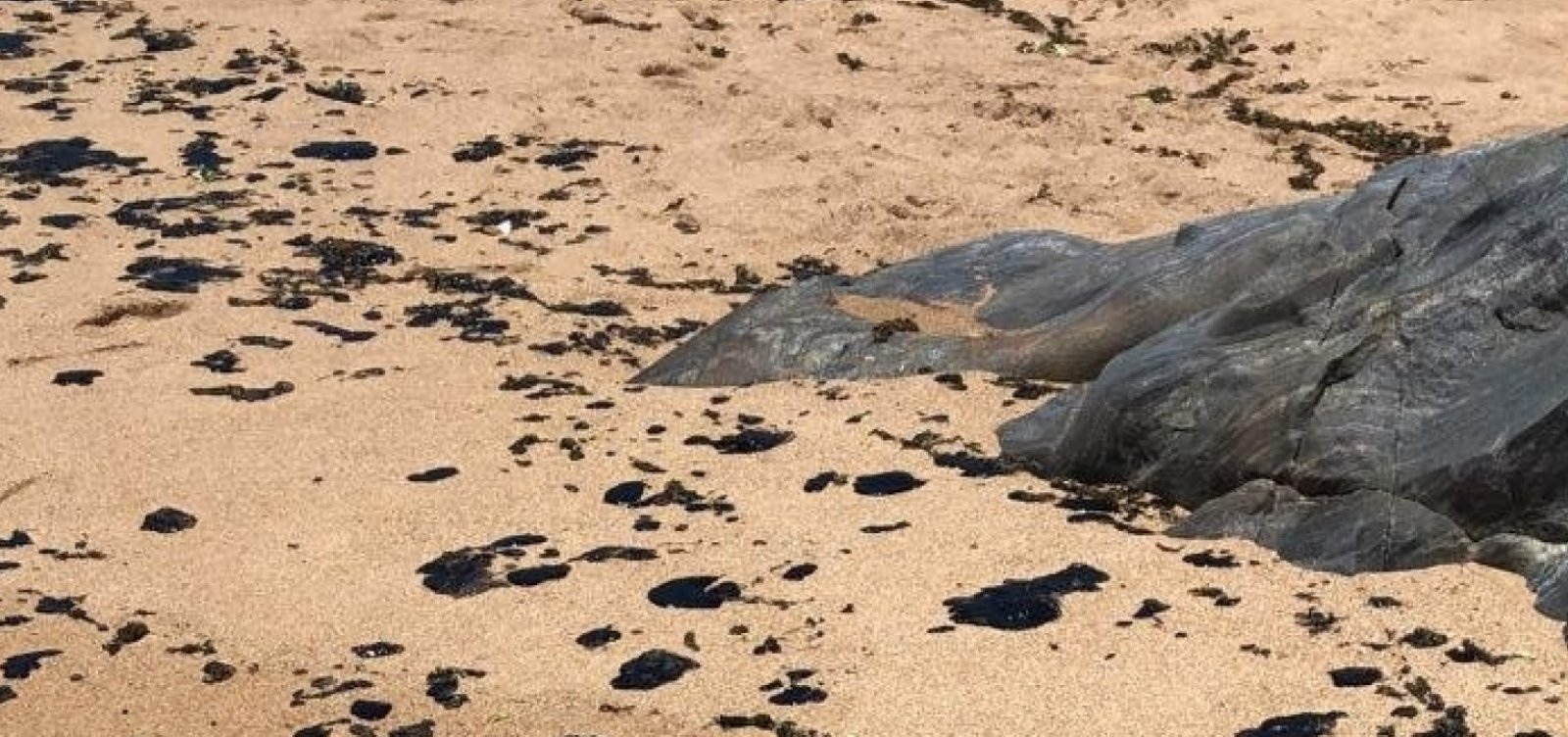 [Grupo de voluntários recolhe óleo em praia de Canavieiras]