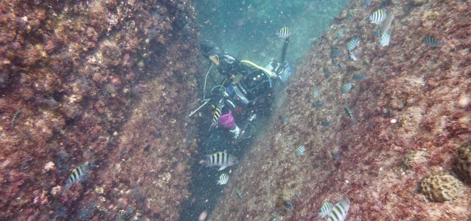 [MPF investiga crime ambiental após fundeio de plataforma na Baía de Todos-os-Santos]