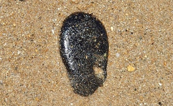 [Praia de Jaguaribe amanhece com manchas de óleo na areia]